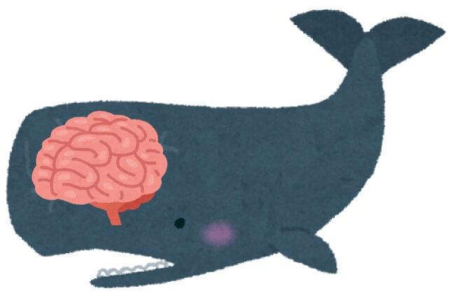 シロ ナガスクジラ 大き さ