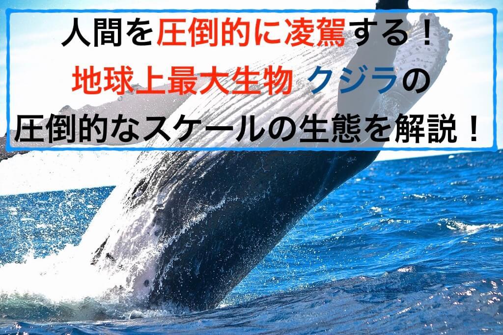 クジラの圧倒的な大きさの生態