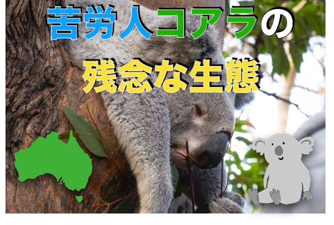 コアラの残念な生態